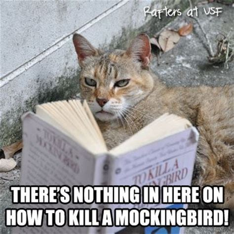 To Kill A Mockingbird Cat Meme - there s nothing in here on how to kill a mockingbird
