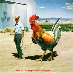Man with the worlds largest rooster