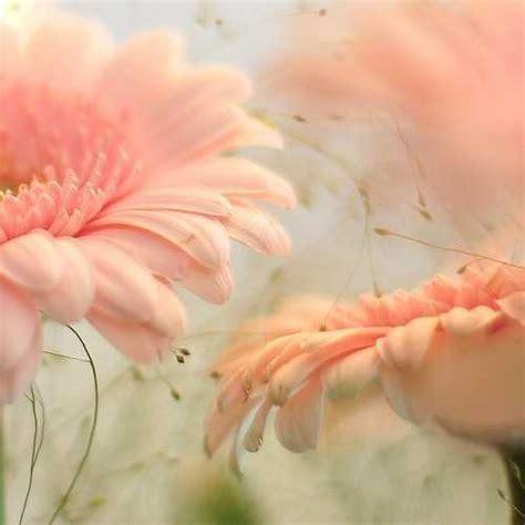 Imagenes Bellas En Pinterest | zoom dise 209 o y fotografia 55 bellas imagenes de flores