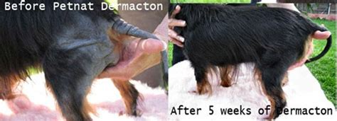 anti itch shoo for dogs 1000 images about dogs with seasonal allergies free treatment on