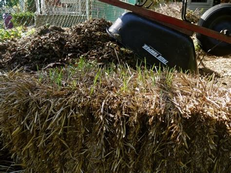 using straw in vegetable garden 101 best images about yard on gardens