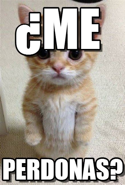 imagenes graciosas con memes imagenes y memes graciosos de gatos para whatsapp fondos