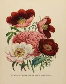tattoo flower print 17 best botanical tattoos images on pinterest