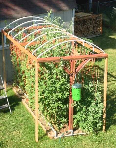 Pvc Trellis Systems how to build a trellis system for vertical growing simple