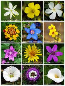 different types different types of flowers