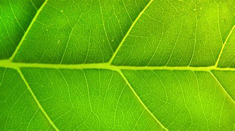 green 27780 1920x1080 px hdwallsource com