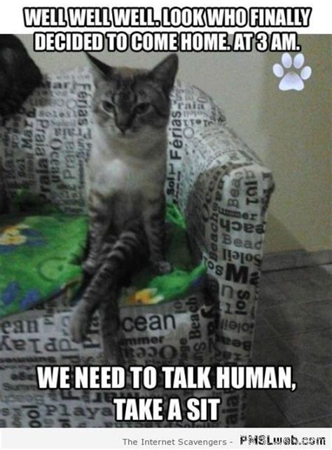 Cat Sitting Meme - saturday pmsl your weekend chuckle zone pmslweb