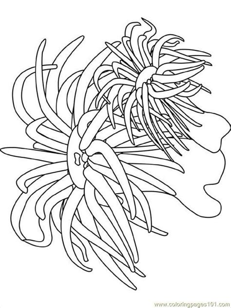 underwater plants coloring pages ocean coloring pages coloring pages sea anemone natural