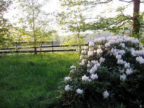cespugli fiori bianchi fiori bianchi cespuglio gpsreviewspot