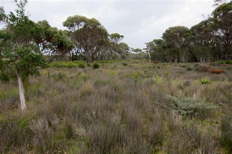 Botanic Gardens And Parks Authority Botanic Gardens And Parks Authority Androcalva Conservation