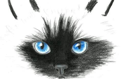 White Colorless Cat Eye drawing tutorials