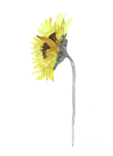 sunflower watercolour painting yellow grey wall print painting by joanna szmerdt