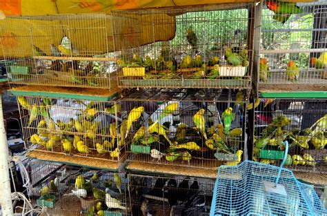 bird market free stock photo public domain pictures
