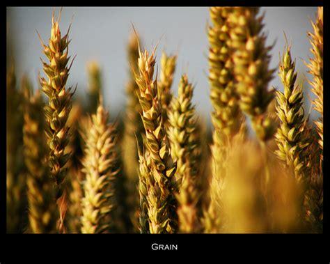 whole grains quotes whole grains quotes like success