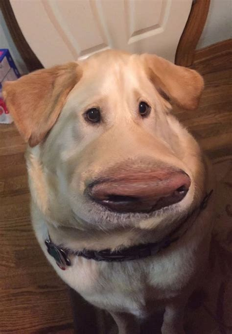 trending people   snapchat filters