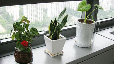 lebih sehat  kantor letakkan tanaman hias  meja