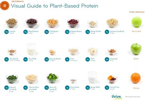 6 vegetables with the most protein vegetable proteins reference food