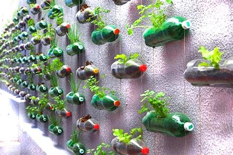wall vegetable garden recycled wonders monkey rama dada