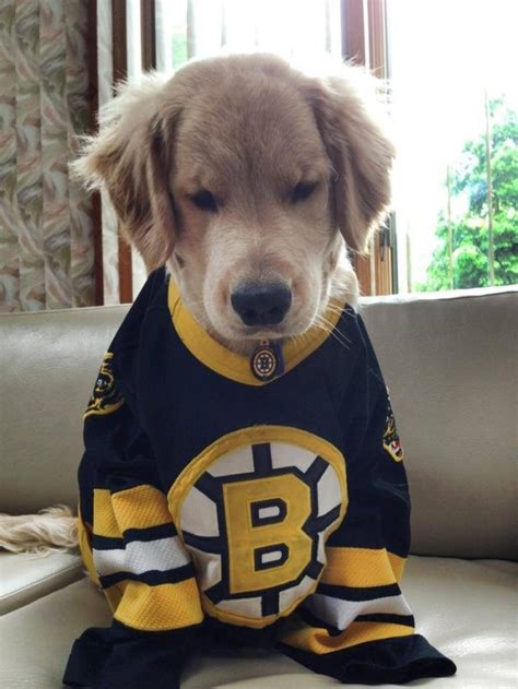dogs hockey blind puppy charles is the cutest on the metro news