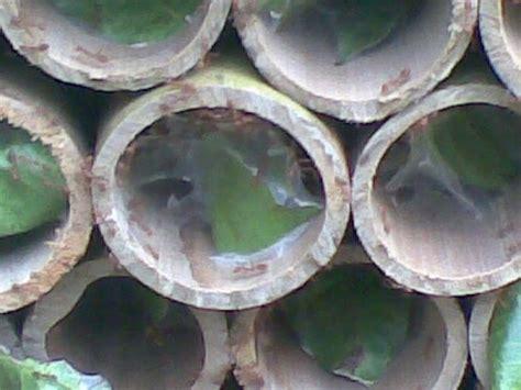 Promo Klem Pipa 1 1 4 Dapat Paku Tahanan Cekak Pralon 1 1 4 Inch kroto semarang membuat sarang ternak semut rangrang dari