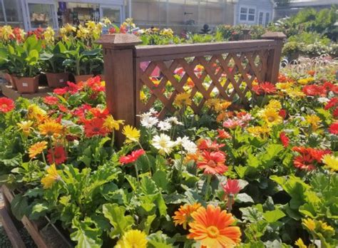 annual color bloomers home garden center