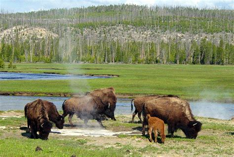 yellowstone national park 4 8 magnitude earthquake in yellowstone park on march 30