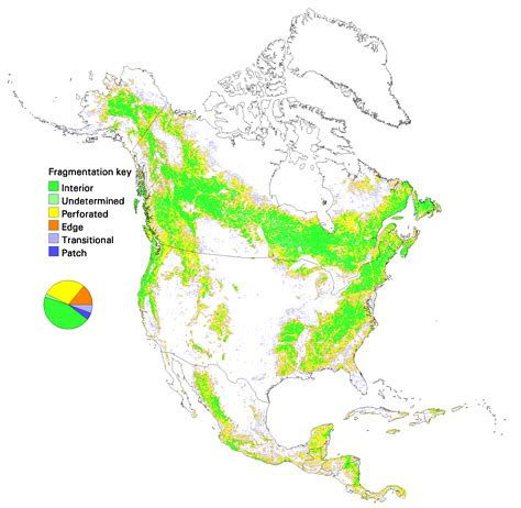 forest map of usa conservation ecology global scale patterns of forest