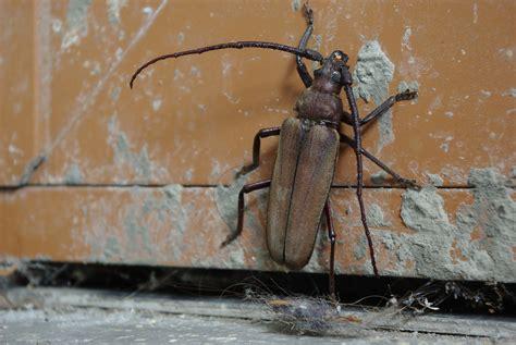 insetti da casa insetti in casa ecco come liberarsi di blatte formiche e