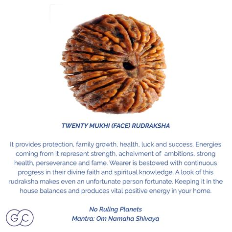 rudraksha meaning 20 mukhi rudraksha meaning and ruling planet gemme