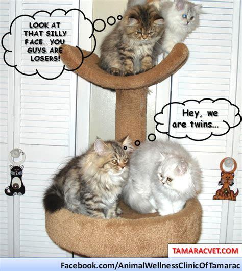 Pet Meme - veterinarians in south florida animal hospital funny