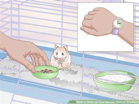 Ways To Take Initiative Without Scaring Him by 3 Ways To Up Your Hamster Without Scaring It Wikihow