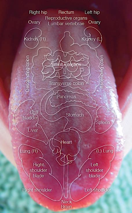 tongue color chart tongue diagnosis letting go