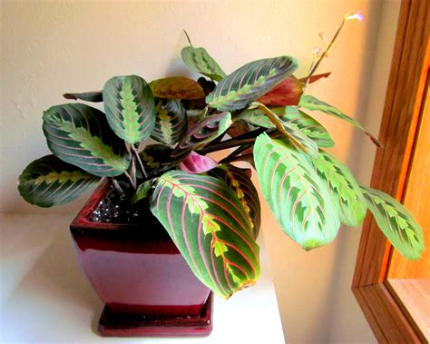 indoor plants that don t need much sun 100 indoor plants that don t need much sun shop