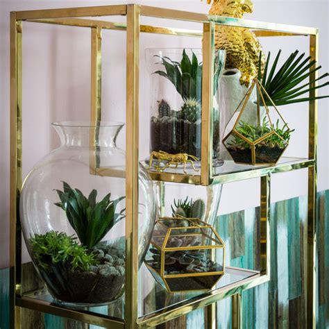 succulent  cactus displays ideal home