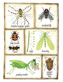 pests in the garden beneficial insects get to the garden bugs