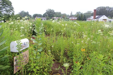 Cross Gardens Care Center by East Meadow S Farm Stand Opens For The Season Herald Community Newspapers Www Liherald