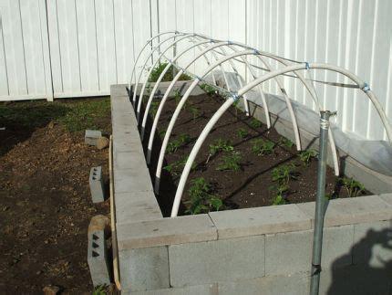 raised concrete bed gardening