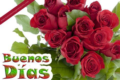 imagenes de rosas image gallery imagenes con rosas