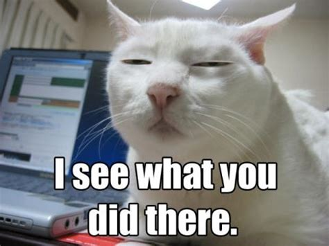 Unamused Cat Meme - i see what you did there imghumour