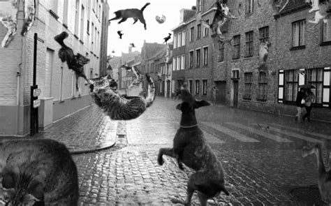 raining cats and dogs meaning written