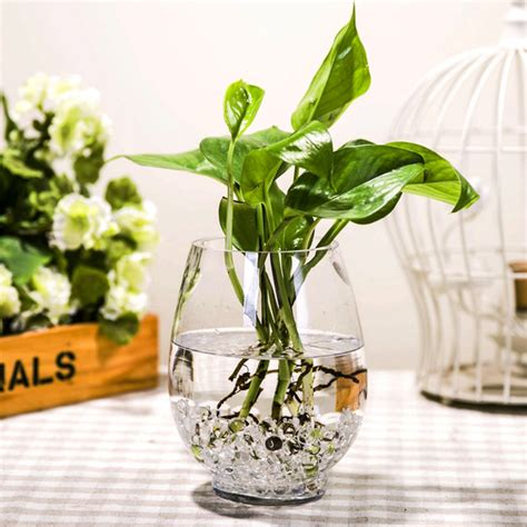 Bamboo In Water Vase by Dinosaur Egg Simple Transparent Vase Hydroponic Lucky