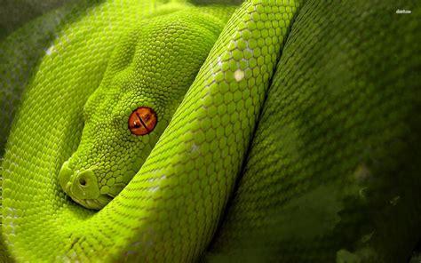 anaconda wallpaper cool snake backgrounds wallpaper cave