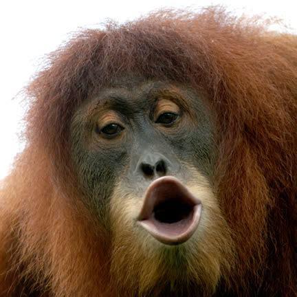 ekspresi lucu monyet funny monkeys expression