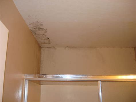 Mildew On Ceiling Cause by Mold And Water Damage Mold Testing