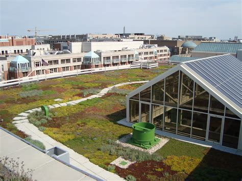 norquist green roof greene roofing aquinas green roof green roof 073 nef