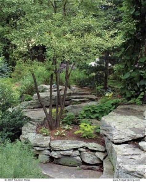 Landscape Rock Depth 1000 Images About Evergreen Privacy Screen On