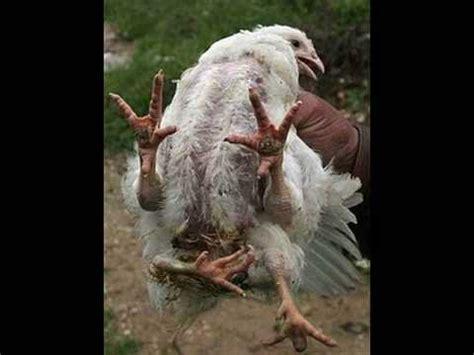 weird,rare,mutate,strange and beautifuls animals youtube