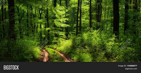 lush green forest path sunny wallpapers lush green photo collection lush green forest path