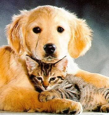 puppies and kittens together can cats and dogs live together the pet product guru