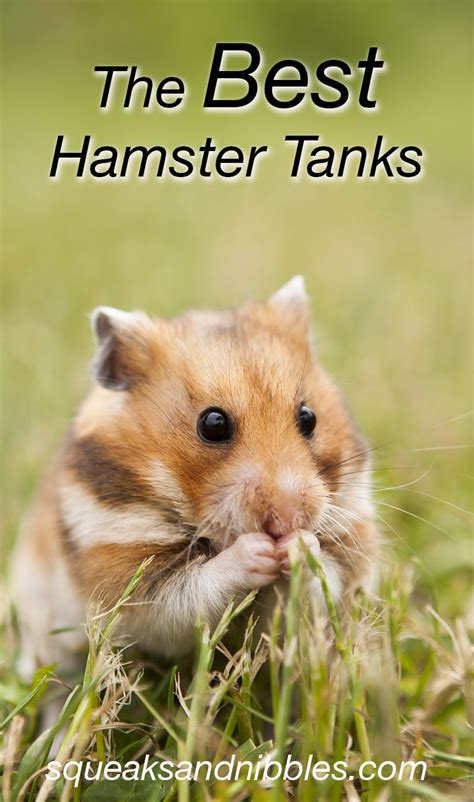 best bedding for hamsters best hamster bedding eco bedding with odor control